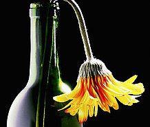 Wilted flower in wine bottle